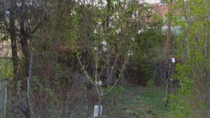 Bienenfreundlicher Bio-Obstbaumwald-und Kräutergarten im Retzerland
