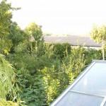 Weide neben thermischer Solaranlage